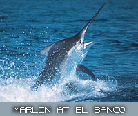 marlin at el banco